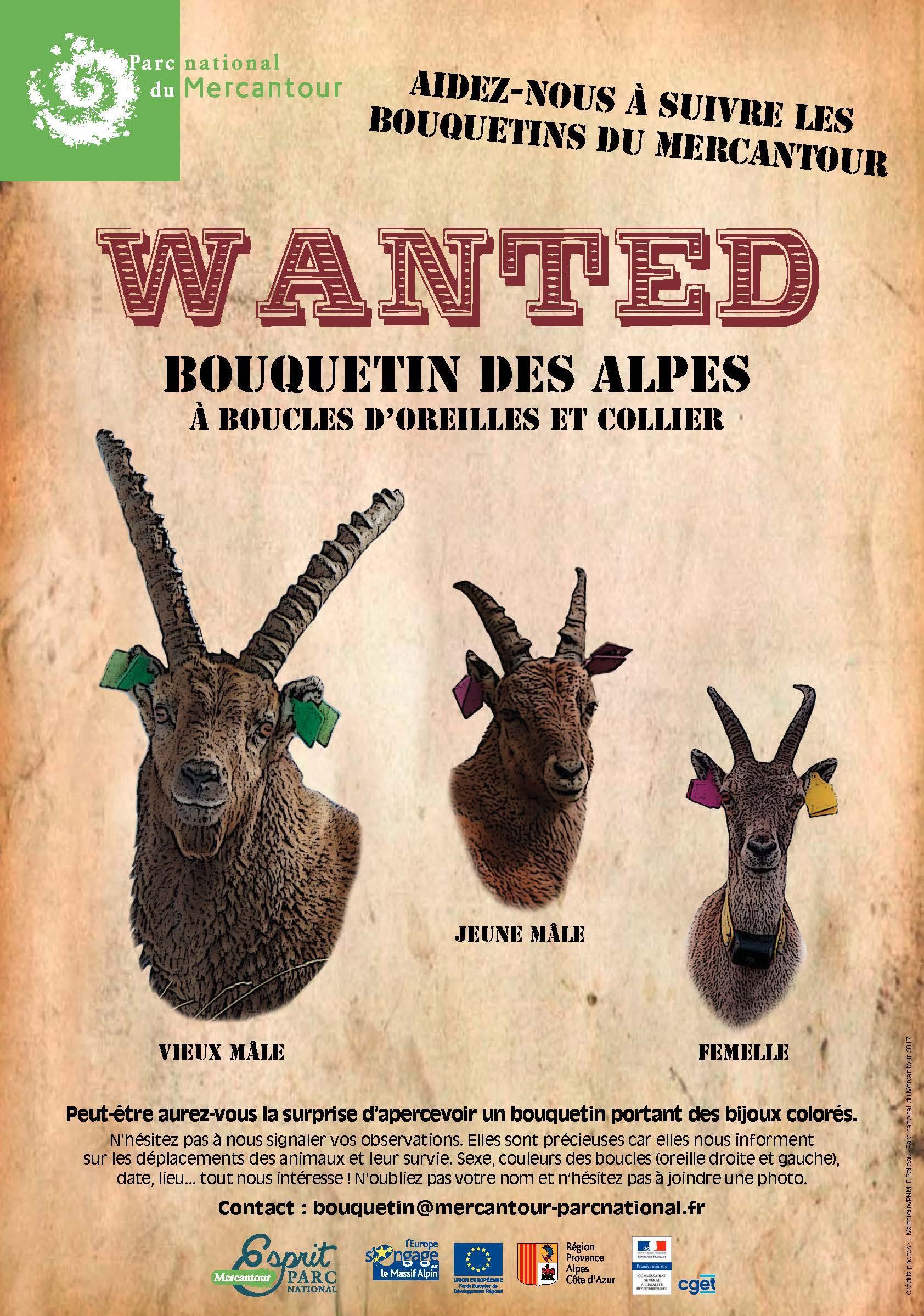 "Affiche ""Wanted"" bouquetin"